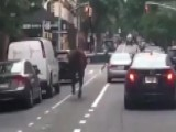 'Stop The Horse!' Animal Runs Wild Through NYC Streets