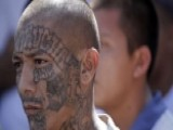 'Hunting MS-13': Part 5