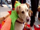 After The Show Show: Dog Halloween Costumes