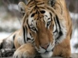 'Big Cats' On The Prowl On 'Fox & Friends'
