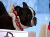 Holiday Gifts That Are Perfect For Pets