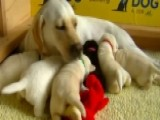 'Daily Briefing' Gets Inside Look At Assistance Dog Program