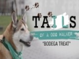 Tails Of A Dog Walker: Biscuit Wants A Treat