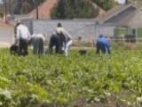 'Zero-tolerance' Policy Impacting California Farmers