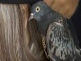 'Liberace' The Lost, Bedazzled Pigeon Reunited With Family