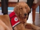 4 Paws For Ability Provides Service Dogs To Children, Veterans