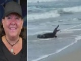 7-foot Alligator Caught On South Carolina Beach