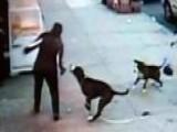 Across America: Camera Captures Pitbull Attack In New York