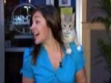Attention-starved Kitty Interrupts Newscast