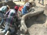 Ancient Mammoth Skeleton Unearthed