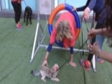 After The Show Show: Dog Training