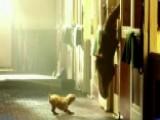Anna Kooiman Goes Behind Scenes Of Clydesdales Ad
