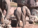 Adorable Baby Elephant Celebrates First Holiday Season