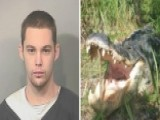 Alleged Burglar Eaten By Alligator While Hiding From Police