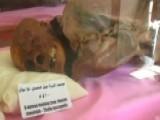 Ancient Mummies Rot Away As Yemen's Civil War Rages