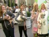 After The Show Show: Puppies!
