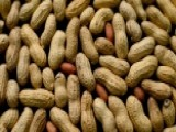 A Look At The New Peanut Allergy Breakthrough