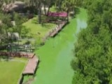 Algae Blooms Cause Major Problems In Florida