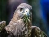 An Air Force Falcon Mascot Suffers Major Injury In Army Prank