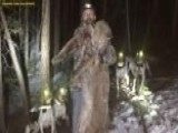 A Colorado Man Is Convicted Of A Felony After Killing A Mountain Lion