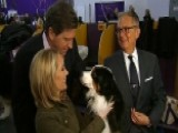 Behind The Scenes Of 2014 Westminster Kennel Club Dog Show