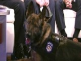 Battle-tested US Army Service Dog Set To Join NYPD