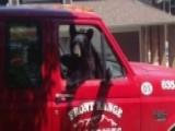 Bear Steals And Eats Turkey Sandwich From Truck