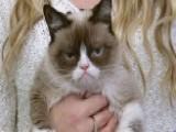 Bah Humbug: Grumpy Cat Stars In Holiday Movie