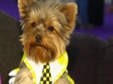 Behind The Scenes Of The Westminster Kennel Club Dog Show