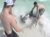 Brave Brothers Remove Fishing Hooks From Hammerhead Shark