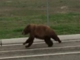 Bear Sneaks Inside Of Garbage Truck