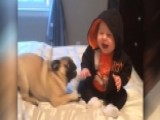 Baby Can't Stop Laughing While Playing With Pugs