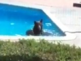 Bear Cools Off With Dip In California Family's Pool