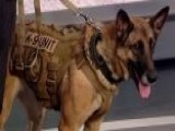 Bomb-sniffing Dogs Are In High Demand