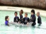 Cancer Kids Get To Swim With Dolphins
