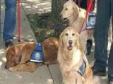 Comfort Dogs Head To Oklahoma