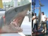 Catch Of The Day: Shark Charges, Jumps Into Boat