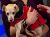 Cold Weather Tips To Keep Your Pup Safe