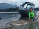 Catch Of The Day: 9-year-old Reels In 600-pound Sturgeon