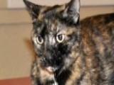 Cat Found Alive In Sunken Boat At Bottom Of Lake