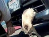 Cat Survives 8-mile Trip Stuck In Car Bumper