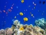 Could 'fish Farts' Explain Strange Ocean Noise?