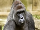 Cincinnati Zoo Under Fire For Construction Of Enclosure