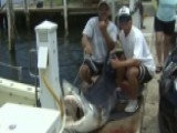 Catch Of The Day: 1st-time Fisherman Reels In 300 Lb. Shark