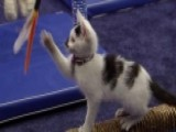 Cat-letes Compete For The Gold In The 'Kitten Summer Games'