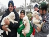 Crews Rescue Three Puppies From Hotel Hit By Avalanche