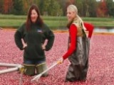 Cranberry Confidential: Meet The Farmers Behind A Holiday Food Favorite