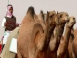 Camel Beauty Pageant Rocked By Botox Scandal