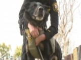 Community Rallies To Buy Ballistic Vests For Its K9 Officers