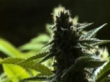 Colorado May Allow Tasting Rooms At Marijuana Dispensaries